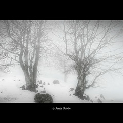 Hayas en invierno (Jess Gabn) Tags: trees winter naturaleza mist tree nature forest rboles bosque rbol invierno niebla euskadi haya oati fagussylvatica oate urbai jessgabn mygearandme mygearandmepremium mygearandmebronze
