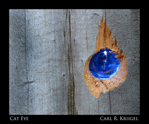 Week 8 Cat Eye