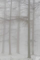 2013_014 (kgorka) Tags: canon kata bizkaia niebla manfrotto gorbea eos7d saldropo alarce gorkabarreras