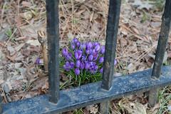 Broke Free! (nycbone) Tags: flowers winter brooklyn garden bbg botanicalgardens