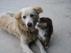 L'amicizia (DonyB) Tags: lamicizia supercontest