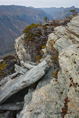 Linville Gorge Wilderness (R. Keith Clontz) Tags: winter moss canyon cliffs rhododendron lichen azalea blueridgemountains linvillegorge appalachianmountains northcarolinamountains mossyrocks rkeithclontz blueridgepics blueridgelight tablemountainpinetrees