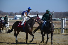 2013-02-14 (66) r2 Jonathan Joyce on #1 Marine Hymn (JLeeFleenor) Tags: horses caballo cheval photography jj photo