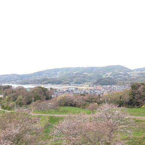 벚꽃과 산.