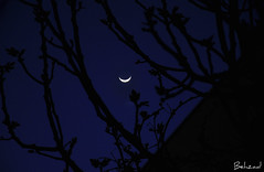 Hide And Seek With Moon (Behzad No) Tags: sky moon night alone hide seek nikond90 behzadno
