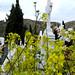 Flores en el Camposanto