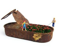 Pescar amapolas (casetamgica) Tags: flores primavera arte poppies pesca pescador objeto lata amapolas conserva