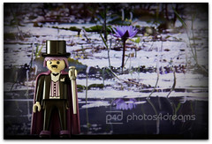 "the ""before edward"" era (photos4dreams) Tags: toy toys twilight doll bat dracula fangs playmobil vampyr vampir blutsauger thedarklord photos4dreams photos4dreamz p4d"
