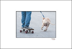 032413 5902 (Joan Day Images) Tags: dog pitbull skatebording