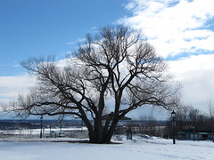 Sub sole... (tumitaittuq) Tags: winter sky snow tree clouds landscape spring hiver ciel qubec neige quebeccity nuages paysage arbre printemps justclouds