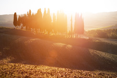 Cypress Sunset (Philipp Klinger Photography) Tags: italien trees light sunset shadow sky italy sun tree field backlight lens landscape evening back nikon san warm europa europe italia counter zoom earth horizon hill warmth natura hills soil val clay tuscany lensflare flare tele cypress montalcino agriculture toscana sole valdorcia philipp rolling rollinghills d800 toskana dorcia counterlight klinger zypresse cipressi quirico sanquiricodorcia nikond800 philippklinger