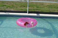 Big Pink Donut #5