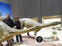 Plateosaurus (Quagga Associats) Tags: park public glass germany outdoors fire zoo one for model eyes paint with dinosaur nest very outdoor 5 five metallic egg double structure newborn layer and polyester to areas resin offspring reconstruction internal conditions in plasticine moulded sculptured quagga retardant resistant plateosaurus hyperrealist sillicone ramonlopez indicidual trosingerii