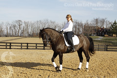 Limage: Rare Breed Cheval Canadien (GlassEyedPonyPhotography) Tags: horse black beautiful beauty mare tail handsome lordoftherings equestrian stallion blackhorse horsebackriding mane andalusian hooves dressage warmblood gelding equestrienne showhorse girlandhorse chevalcanadien womanandhorse