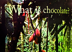 Chocolate Exhibition 57 (Grete Howard) Tags: museum bristol chocolate exhibition cocoa cadburys frys cacao mshed