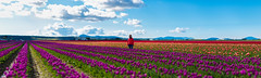 Haley, Skagit Valley (absencesix) Tags: family flowers red people panorama orange plants nature colors field washington spring girlfriend seasons purple unitedstates tulips bokeh events 85mm noflash april northamerica skagit mountvernon locations skagitvalley locale tulipfields manualmode iso50 85mmf14 2013 geo:state=washington exif:focal_length=85mm exif:iso_speed=50 haleymontgomery hasmetastyletag hascameratype naturallocale haslenstype camera:make=nikoncorporation brenizermethod selfrating5stars exif:make=nikoncorporation exif:lens=850mmf14 geo:countrys=unitedstates exif:aperture=14 assortedevents subjectdistanceunknown geo:city=mountvernon afsnikkor85mmf14g 13200secatf14 nikond800e exif:model=nikond800e camera:model=nikond800e april142013 skagitvalleytulipfestival04152013 geo:lon=1224468798 geo:lat=484232424 482524n1222649w mountvernonwashingtonunitedstates