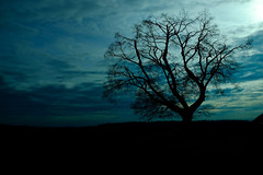 Lonely Tree (donlunzo16) Tags: morning sky color tree clouds aperture focus alone fuji vibrant deep fujifilm x100s