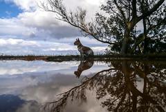 El arbol y Paty/The tree and Paty (josemanuelvaquera) Tags: reflejos mascotas paty nubes ceuta
