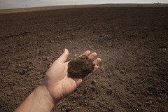 Handful of Soil in Bahia Blanca, Argentina (IFPRI-IMAGES) Tags: soil evidence jacobacci farm homestead dry drysoil arid crumble nowater dust impact vegetation soilstructure conservation argentina till fertile dirt crop agriculture healthy restore bahiablanca ifpri