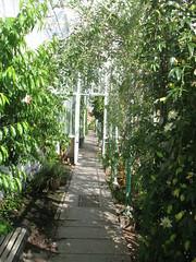 IMG_6530 (jrcollman) Tags: plants peachprunuspersica pplant arleyhallgardens passiflora cheshire