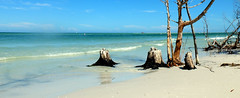 (Aucunale TNT) Tags: usa etatsunis fort de soto fortdesoto florida floride beach plage crystal clear water sand white whitesand sableblanc tree tan hot weather