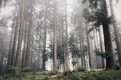 Ghostlike (explore) (desomnis) Tags: forest woods woodland wood fog mist foggy misty haze nebel nebula nature wildness wild bohemia mhlviertel austria sterreich obersterreich upperaustria natural explore bohemianforest bhmerwald desomnis canon6d sigma35mm trees vsco