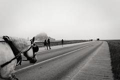 Foggy Mont St-Michel (G.Eco) Tags: brouillard fog foggy noiretblanc blackandwhite cheval horse mont saintmichel france