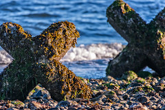 Morning XX (ausmc_1) Tags: nikkor2oo500 kinbeach comox waterfront nikon14tceii vancouverisland pacificocean stillife outdoor d800 canada 2016 britishcolumbia georgiastrait cement