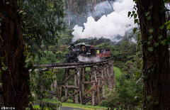 Drizzle (Dobpics O'Brien) Tags: pbr puffingbilly pbps train trestle bridge belgrave climax engine locomotive rail railway railways victorian victoria vr rain monbulk creek steam