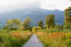Sentiero Valtellina near Colico (Italy) (clodio61) Tags: colico europe lecco lombardy sondrio valtellina bicycle color country day flower gingerlily green landscape lilium lily natural nature outdoor path pedestrian photography plant sentiero summer tree