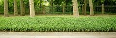 formal (daniel_james) Tags: 2016 treptowerpark berlin germany europe canon1022mm greenery parkland ivy tree path garden 31 fences