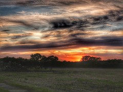 Evening Sky HDR (davidntaylor1968) Tags: sunset landscape scenics tranquilscene tree tranquility beautyinnature field orangecolor dramaticsky cloudsky idyllic nature sky cloud nonurbanscene majestic growth cloudy multicolored showcaseseptember photography hdr hdrphotography