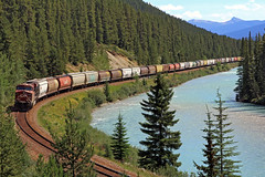 Canadian railway (vic_206) Tags: train canada montaasrocosas rockymountains rio river bosque canoneos60d canon24105f4lis