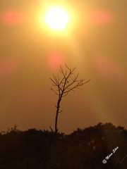 Águas Frias (Chaves) - ... a árvore só ... sob o sol escaldante ... (Mário Silva) Tags: águasfrias aldeia chaves trásosmontes portugal ilustrarportugal madeinportugal máriosilva setembro 2016 verão lumbudus pôrdosol pds árvore sol contraluz