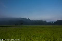 Blue Green (ArunaSene) Tags: morning blue sky mist field clouds sunrise landscape dawn scenery rice paddy scenic scene snap srilanka scape arunaseneviratne arunasene