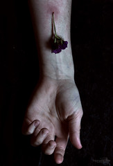 profound mystery (Jeannette Rose) Tags: flower hand arm pale veins limbs driedflower jeannetterosephotography