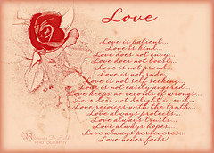 Agape Love (Moments To Hold) Tags: love rose patient kind hopes trusts agape 1corinthians13 protects loveneverfails