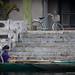 """De vélo en barque. Ainsi va la vie à Tam Coc. • <a style=""""font-size:0.8em;"""" href=""""http://www.flickr.com/photos/53131727@N04/8477165859/"""" target=""""_blank"""">View on Flickr</a>"""