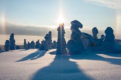 Riisitunturi National Park (flyingdodo) Tags: winter sun snow suomi finland landscape nationalpark halo lapland riisitunturi