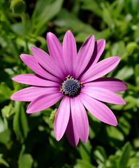 Nature in the Agora (Keith Mac Uidhir  (Thanks for 3.5m views)) Tags: flowers light sun sunlight white color colour green luz sunshine petals europe european purple pansy lavender hellas sunny athens greece lilac grecia atenas daisy mauve athena tp griechenland grce luce athene hy  athen grcia griekenland yunanistan  athnes atina grekland grecja  atene     athny   grgorszg ecko    yunani  lp   gresya
