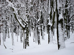 Zimowa grafika (ela_s) Tags: park trees winter kraków zima śnieg grafika dzrewa lotnikow canons90