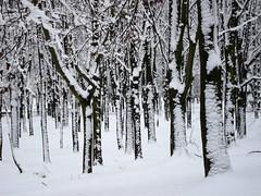 Zimowa grafika (ela_s) Tags: park trees winter krakw zima nieg grafika dzrewa lotnikow canons90