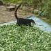 Honey badger loves coca