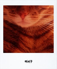 "#DailyPolaroid of 22-2-13 #147 • <a style=""font-size:0.8em;"" href=""http://www.flickr.com/photos/47939785@N05/8533831248/"" target=""_blank"">View on Flickr</a>"