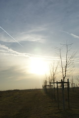 DSC03726 (MiasHigazi) Tags: white feld wolke wolken bume weis bsche wrrstadt