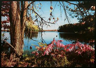 Horseshoe Lake GumPrints
