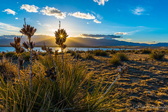 Yucca Flare: Explored #40 (Matt-Payne) Tags: blue light sunset sky plants landscape skull colorado desert flare coloradosprings yucca pikespeak d800 prairedog nikon2470f28 diffractionspike bigjohnsonreservoir bluestempraireopenspace
