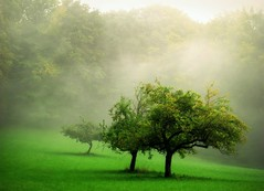 Applegreen (BphotoR) Tags: autumn oktober green apple fog germany deutschland haz
