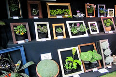 Well Framed (Jocey K) Tags: show flowers newzealand plants art frames exhibit nz ellerslieinternationalflowershow framedplantart