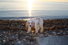 Sunrise on the Beach (notamaiar) Tags: family puppies 2013 littlebluehouse